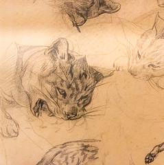 IMG_1795 (jaglazier) Tags: 123018 17911824 1791ad–1824ad 1820 1820ad 19thcentury 19thcenturyad 2018 animals cambridge crafts december drawing france french géricault harvardartmuseum massachusetts museums théodoregéricault usa art cats chalk copyright2018jamesaglazier graphite mammals romantic sketches studies