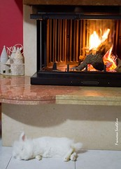 Relax (francescasmal) Tags: fuoco camino coniglio inverno