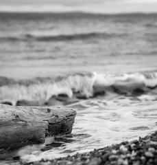 Driftwood and Waves, monochrome (mfenne) Tags: marlowefenne kayak point state park leica landsape monochrome black white selective focus