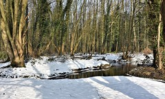 Snowy river scene. (pstone646) Tags: snow river woodland nature trees kent sunshine shadows cold flora ivy water landscape