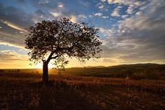 L'arbre au soleil couchant (Excalibur67) Tags: nikon d750 sigma globalvision art 24105f4dgoshsma arbre tree ciel sky nature nuages cloud campagne coucherdesoleil sunset