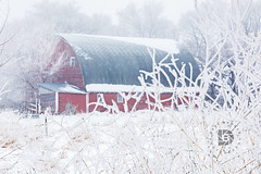 Frost In The Country - #500 (DBruner240) Tags: barn red nd north dakota frost snow winter old farm building