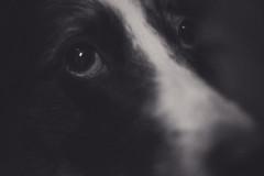 Bella (www.altglas-container.de) Tags: dog portrait haustier bella pet hund