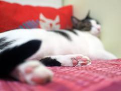 Sam (Steve only) Tags: olympus pen ep5 mzuiko digital 17mm 118 f18 1718 cats sam