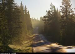 20160621_3 Forest road & yellow morning mist near Rjukan, Norway (ratexla) Tags: ratexlasnorwaytrip2016 driveitlikeyoustoleit norway 21jun2016 2016 canonpowershotsx50hs norge scandinavia scandinavian europe beautiful earth tellus photophotospicturepicturesimageimagesfotofotonbildbilder europaeuropean summer travel travelling traveling norden nordiccountries roadtrip wanderlust journey vacation holiday semester resaresor sommar nature landscape scenery scenic norwegian ontheroad morning fog mist dimma dis morgondimma forest trees road roads paved väg vägar påväg landsväg skogsväg ratexla favorite almostanything unlimitedphotos inagallery