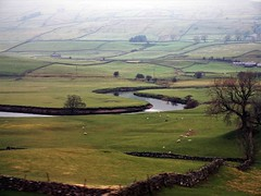 Meandering river (saxonfenken) Tags: 7319river 7319 river dales yorkshire fields green dull misty tree perpetualchallenge tcfunamdec perpetual storybook pregamesweep challengeyouwinner cyunanimous game gamewinner friendlychallenges