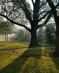 New Year's Day Mist (Ellsasha) Tags: garden trees grass sunlight mist misty sunrays smoke shadows