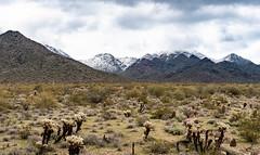 Fleeting (Ron Drew) Tags: nikon d850 scottsdale winter arizona snow mountains mcdowellmountains park preserve saguaro cholla creosotebush clouds nature landscape outdoor