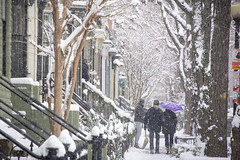 Snow in the city - Swann Street NW (Tim Brown's Pictures) Tags: washingtondc city urban 14thstreetcorridor ustreet winter snow snowing snowstorm snowflakes january132019 people pedestrians washington dc unitedstates
