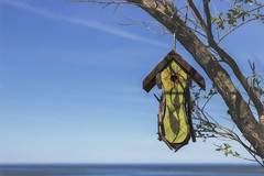 beachside getaway (rockinmonique) Tags: newbrunswick ocean sky tree birdhouse summer blue green moniquewphotography canon canont6s tamron tamron45mm copyright 2019 monique w photography