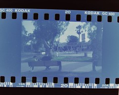 (Abismales) Tags: parque streetphotography street urbano urban urbanphotography analogphotography vivitar atacama fotografia filmphotography park scan 35mm photography chile film