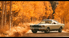 Shelby GT 350 (at1503) Tags: inyonationalforest orange yellow autumn autumncolours trees leaves light goldenlight shelby gt350 musclecar classiccar shelbygt350 americancar america california usa silverbirches backgroundblur gtsport granturismo granturismosport motorsport racing game gaming ps4