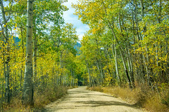 Fern Lake Road in Fall (Snap Man) Tags: colorado fernlakeroad rockymountainnationalpark rockymountains aspens byklk fallcolors