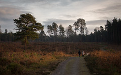 Golden Evening (music_man800) Tags: winterfold heath surrey common woods forest hurtrwoo hurtwood hills aonb area outstanding natural beauty nature uk united kingdom forests light walk walking hike winter january 2019 outside outdoors cold evening dusk late afternoon golden gold sunlight sunny shadows contrast sunset sun set clouds sky haze people person dog path heather canon 700d adobe lightroom creative cloud edit photography arty artistic scenery scene landscape
