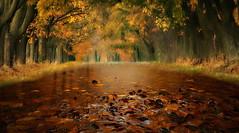 Colori invernali (Zz manipulation) Tags: art ambrosioni zzmanipulation autunno inverno giallo arancio natura foresta piante foglie allagato pioggia acqua tronco strada