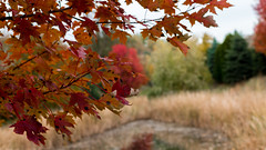Enjoying the Wisconsin Fall (Ben Roeger) Tags: fallphotography outdoors wisconsinfall canon50mmf18stm colors fall