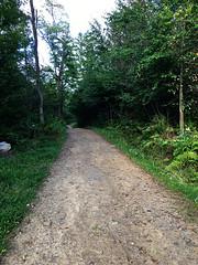 IMG_6418_eh (wyldanthem) Tags: allegheny national forest