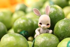 Productive Grocery Store Adventures (AluminumDryad) Tags: cocoriang tobie anthrobjd tinybjd balljointeddoll rabbit bunny kroger toy resin