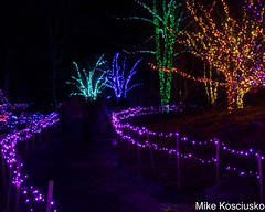 915A6313 (mikekos333) Tags: 2018 december christmas christmaslights coastalmainebotanicalgardens boothbay