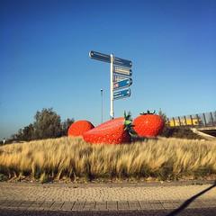 weekendje Uden - Sept 2018 (Kristel Van Loock) Tags: uden visituden nederland thenetherlands visitthenetherlands visitnederland paesibassi lespaysbas paysbas olanda niederlande lospaísesbajos paísesbaixos paísesbajos noordbrabant brabantseptentrional aardbeiendriveinjb aardbeiendrivein aardbeien strawberries fragole httpwwwaardbeienvanjanenbirgittenl aardbeienvanjanbrigitte weekendjenederland weekendjeweg