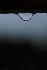 _DSC8530 (Ouverture Sauvage) Tags: photo photographe photographie photograph photography photos photographies macro macrophotographie macrophotography pluie rain rainy day journée pluvieuse mélancholie melancholy black grey blue bleu gris noir nikon d3000 nikkor 35mm