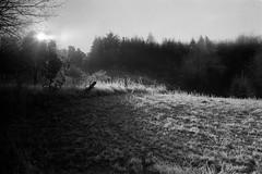 soft winter sun (mischlicht.net) Tags: kentmere400 leicam6classic xtol10 zeisscbiogon35mm28 mischlichtmischlichtnetfilmphotographyanalogueanalogefotografieblackandwhiteschwarzweismonochromelandschaftlandscapetreetreesbaumbäumewinter icy sunset