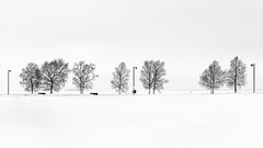 2019-01-05 (transpicuous) Tags: sonya7 zeissfe55mmf18za blackwhite landscape snow sky trees lamppost bench winter overcast