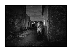 Horse (Paphylo) Tags: night leicaq grain dark atmosphere blackandwhite mood outdoor monochome horse poland document littledoglaughednoiret