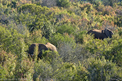 (chrisparkeruk) Tags: kuzuko southafrica wildlife safari lions birds desert cheetah cats springbok antelope monkey animals