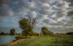 Cross frontiers. Fly away. (Ingeborg Ruyken) Tags: shertogenbosch autumn october oktober instagram 500pxs natuurfotografie ochtend fall flickr herfst