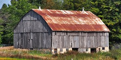 Abandoned barn, Oro-Medonte, Simcoe County, Ontario. (edk7) Tags: olympusomdem5 edk7 2017 canada ontario simcoecounty oromedonte abandoned farm barn country countryside rural weatheredwood rustycorrugatedsteelroof weed tree derelict disused vacant corrugated architecture building oldstructure gambrelroofline