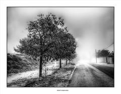 Telegraph Road... (michel di Méglio) Tags: brouillard fog bw monochrome marseille route arbres silverefex