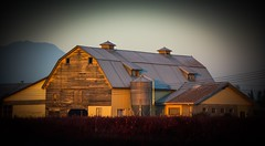 Four Birds - Countryside vignette (Christie : Colour & Light Collection) Tags: farm barn blueberrybushes silo sundown glow country lowlight mountain blueberryfarm bc canada vignette countryside nikon dslr goldenhour artistic bushes yellow red roof