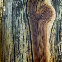 Yakisugi (Aaron Bieleck) Tags: hasselblad500cm 120film analog 6x6 square film filmisnotdead hasselblad mediumformat wlvf tree burn woodgrain texture kodakportra160 sawtoothmountains backpacking 60mmct 10mmextensiontube