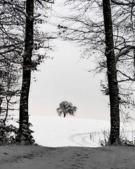 Tree gate (ramvogel) Tags: sony a6300 sony18105mm zürich tree winter snow blackwhite bw way switzerland landscape