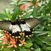 Butterflies of Aruba (In Explore) (Brad Harding Photography) Tags: butterfly butterflies aruba cruise butterflygarden caribbean tropical colorful nature explore inexpore explored