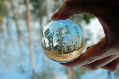 Having A Ball In The Woods. (dccradio) Tags: lumberton nc northcarolina robesoncounty outdoor outdoors outside nature tree trees bokeh nikon d40 dslr saturday saturdayafternoon winter january lensball ball glassball lensballphotography tensphy glassballphotography crystalball crystalballphotography woods sky bluesky backyard goodafternoon afternoon grass ground browngrass tallgrass weeds hand