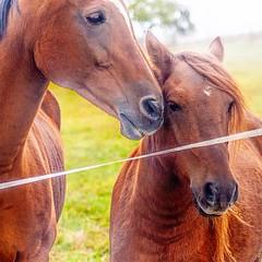 Bei einem Spaziergang #horse #pferde #fotografieren #fotografie #spassanderfreu (klaudia.brassel) Tags: pferdefreude horses tierliebe tierfreundlich forderten natur tiere wald land ländlich augen liebe mylife photo
