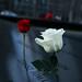 Flowers on 9/11 memorial museum