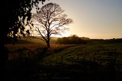 Tree of inspiration (Johans tilted tripod) Tags: tree sun sunset landscape silhoutte unitedkingdom warm inspiration beautiful soothing fuji