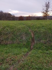 Passage de chevreuils qui traversent la route ... mais pas pour trouver du travail. (Marie-Hélène Cingal) Tags: cagnotte landes 40