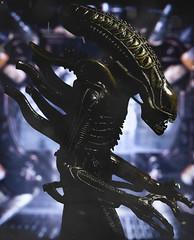 Alien (Jezbags) Tags: toy toys alien aliens macro macrophotography macrodreams canon canon80d 80d 100mm space ridleyscott spaceship horror neca