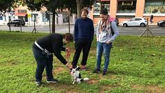 IMG_8587 (Doggy Puppins) Tags: educación canina adiestramiento canino perro dog