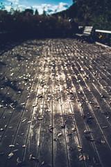 boardwalk (N.sino) Tags: m9 ultron35mmf17 boardwalk fallenleaves showakinenpark bench sky bluesky cloud ボードウォーク 木道 枯葉 落ち葉 板 ベンチ 空 雲 秋 初冬 晩秋