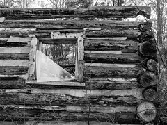 Lonely vigil (Wicked Dark Photography) Tags: bw wisconsin abandoned autumn blackandwhite cabin decay derelict fall logcabin monochrome ruin ruins rurual window