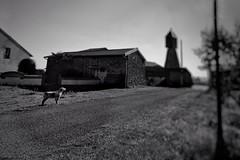 Guarding the estate (LUMEN SCRIPT) Tags: unsharp blur silhouette animal dog softfocus perspective path monochrome nikond3300