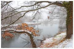 Première neige (Pascale_seg) Tags: landscape paysage étang river riverscape hiver automne neige snow neve moselle lorraine grandest france nikon reflets reflections brume mist misty nebbia