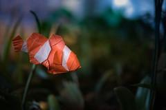 Clown Fish ( origami ) (Adri 79) Tags: adrianodavanzo sigma105mmf28exdgoshsm origami paper yootaeyong clownfish