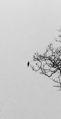 Being alone is way different than being Lonely (Sathiya Narayanan.M.M) Tags: magical salem yercaud minima minimal minimalism bw trees bird birdphotography awesome countryside negative space black white photo end year