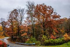 Westbrook Park_4596 (smack53) Tags: smack53 foliage fall fallseason fallcolors autumn autumnseason autumncolors colorful westmilford newjersey nikon d100 nikond100